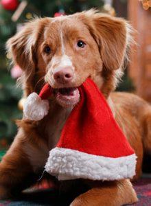 Openingstijden dierenarts sneek feestdagen
